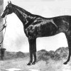 Irish Horse that won the Chester Cup at the Height of the Great Famine