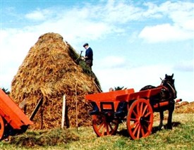 Photo: Illustrative image for the 'Farming in South Mayo Long Ago - Kilmaine' page
